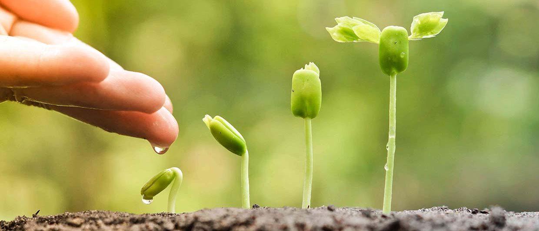 s-growing-plants-e1466552432355