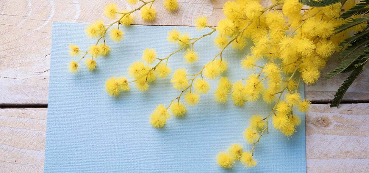 s-mimosa-on-wooden-table-e1466552358321